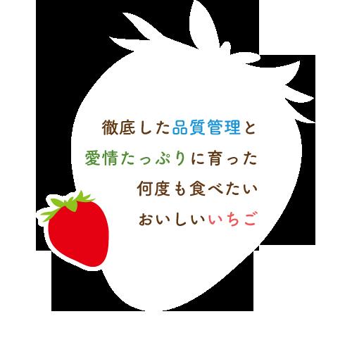 徹底した温度と湿度の管理で栽培された、何度も食べたくなる美味しいイチゴ